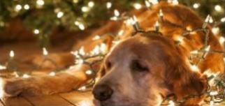 Świąteczna Paka dla zwierzaka
